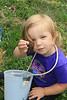 Blueberry Picking in Millstone, NJ, June 22, 2014 :